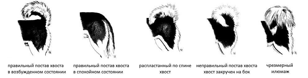 Хвост у Сибирских хаски