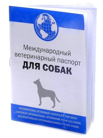 Как зарегистрировать щенка в клубе, регистрация собак