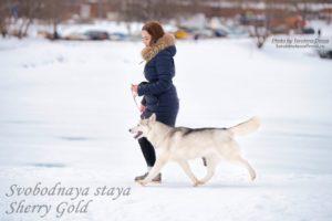 SVOBODNAYA STAYA SHERRY GOLD