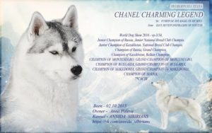Svobodnaya Staya Chanel Charming Legend