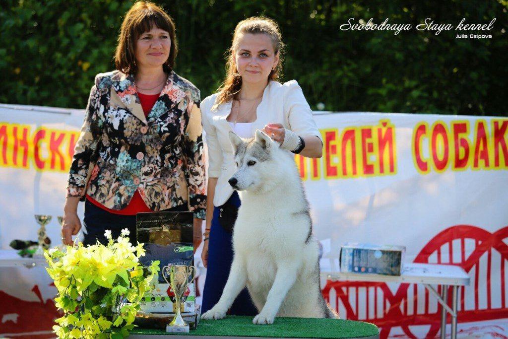 Svobodnaya staya pandora