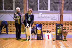 Svobodnaya Staya Yamal in Tver dog-show