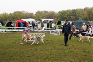 Svobodnaya Staya in Hungary dog-show