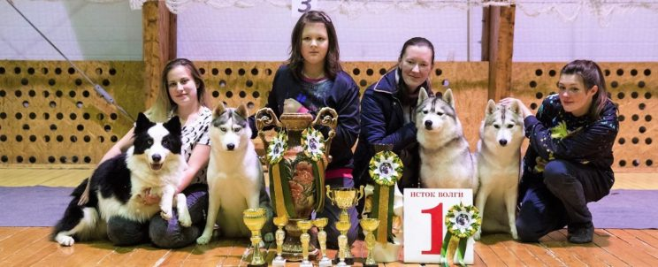 Svobodnaya Staya in Tver dog-show