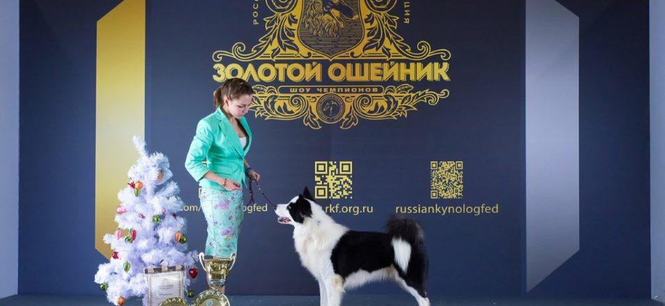 Золотой ошейник 2017