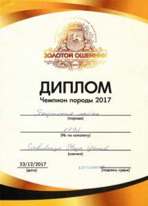 Champion Diploma