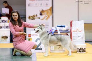 Свободная стая на выставках собак