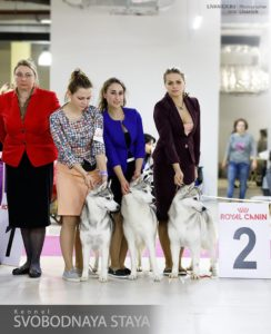 dog-show 21-01-18 moscow