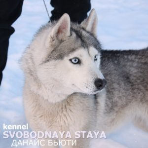 SVOBODNAYA STAYA DANAIS BEAUTY