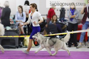 dog show in Moscow 1