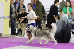 dog show in Moscow 3