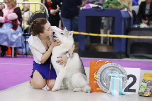dog show in Moscow 4