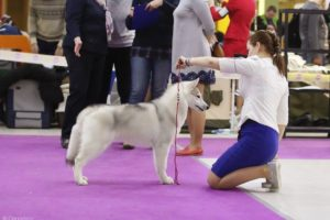 dog show in Moscow 5
