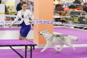 dog show in Moscow 6
